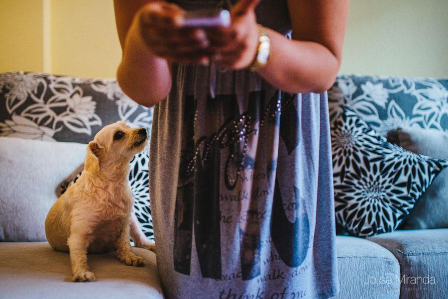 Novia nerviosa con el móvil mientras su perro quiere jugar con ella